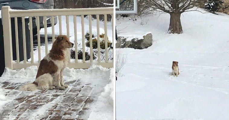 Изоставено куче чака 5 дни в снега стопаните си да се върна! Настаняват го в приют