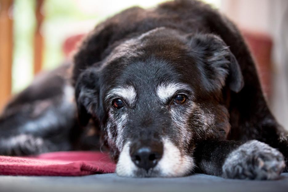 Учените обясняват защо загубата на куче се равнява на загубата на близък човек