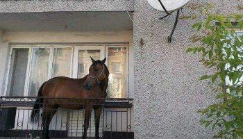 Кон на балкона в Благоевград